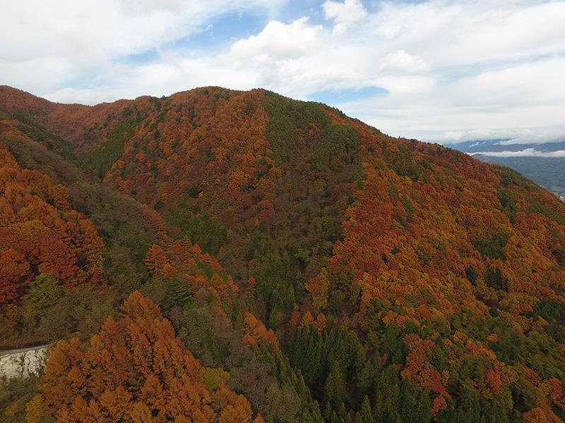 与田切渓谷紅葉